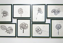 2009  Camellia Series and Other Sketches