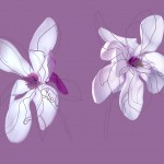 Magnolias 2, manipulated digital photograph and drawing