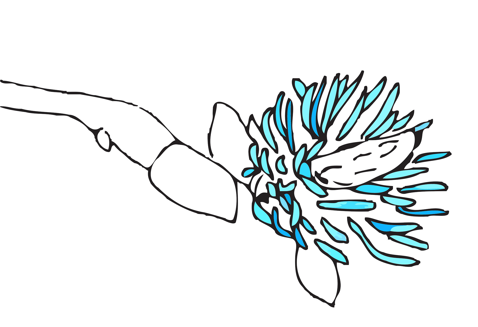 Magnolias 4, manipulated digital drawing