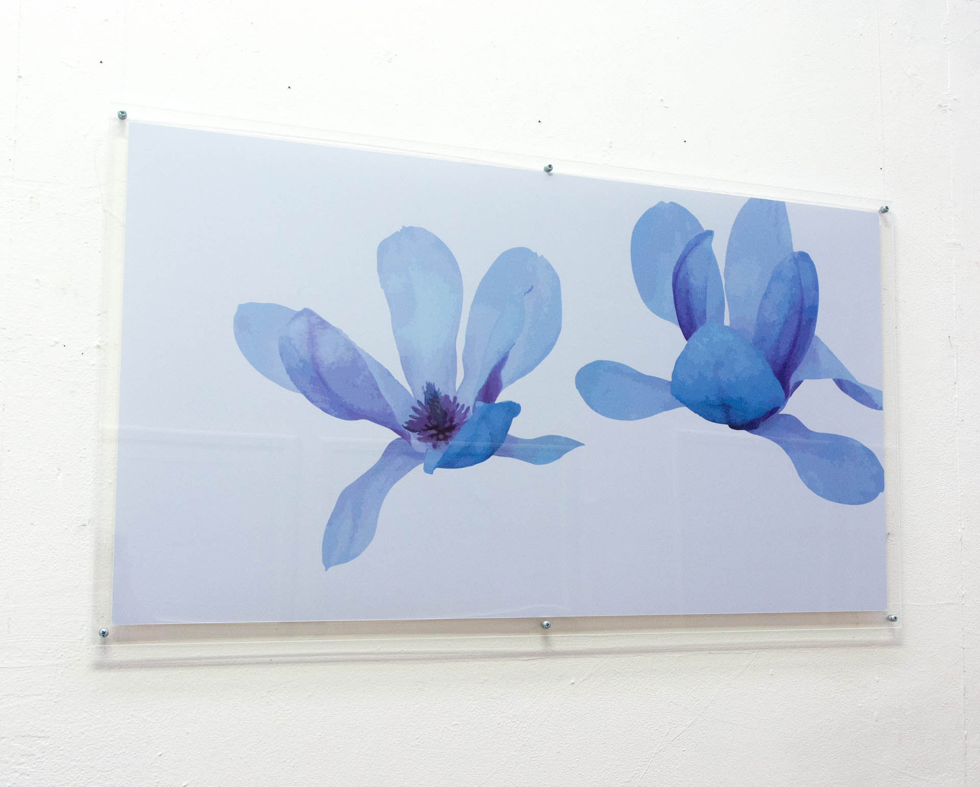 Magnolia 272, Two Big Flowers, photographic paper in acrylic frame