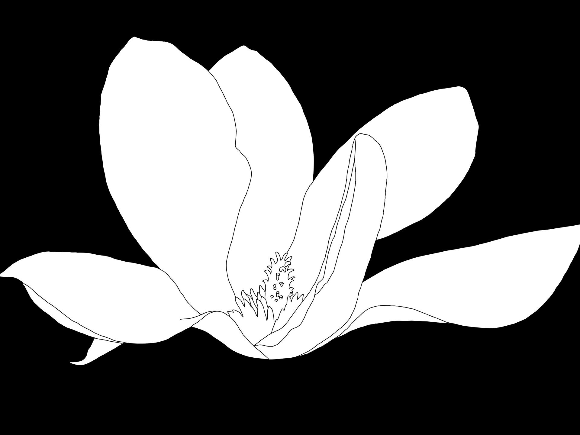 Magnolia-200-BW Drawing
