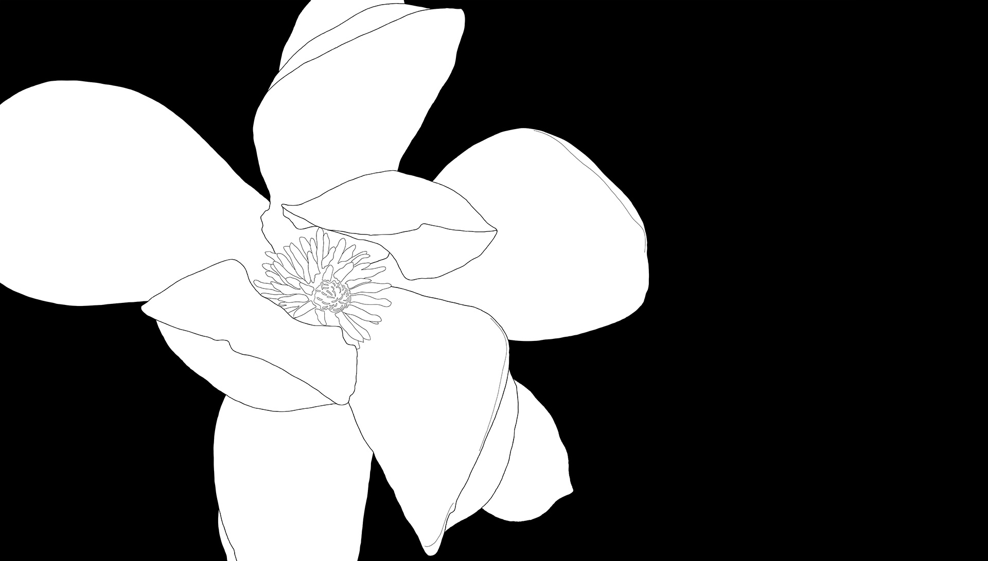 Magnolia 3253 BW Drawing