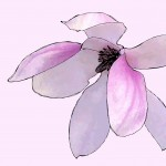 Magnolia-3337-Drawing-light