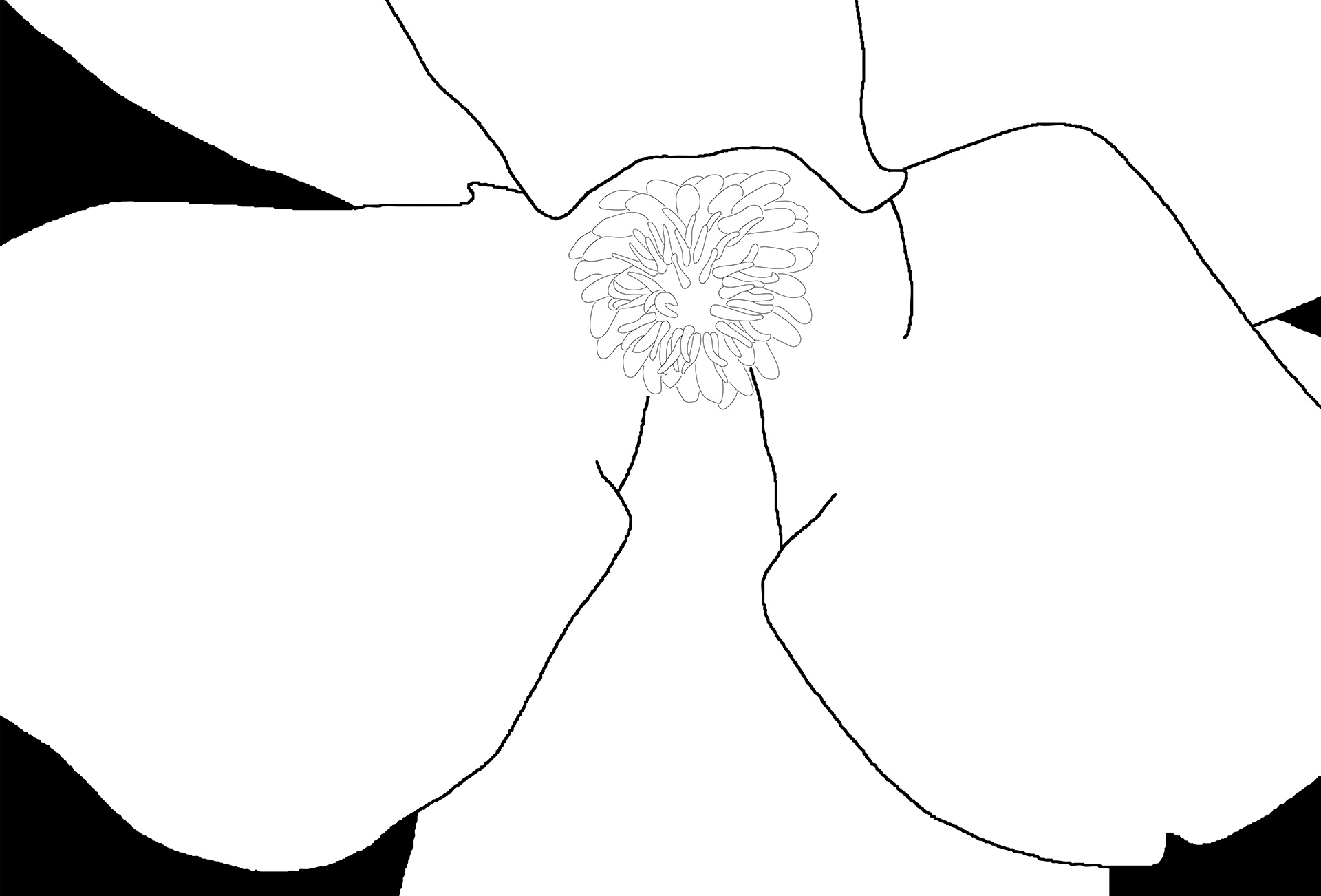 Magnolia-4577-BW Drawing - detail square