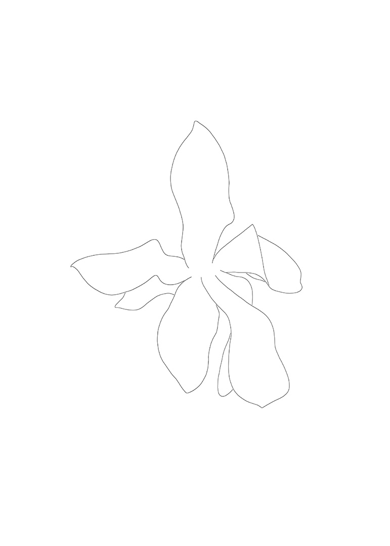 Magnolia Drawing 2, Flower 1