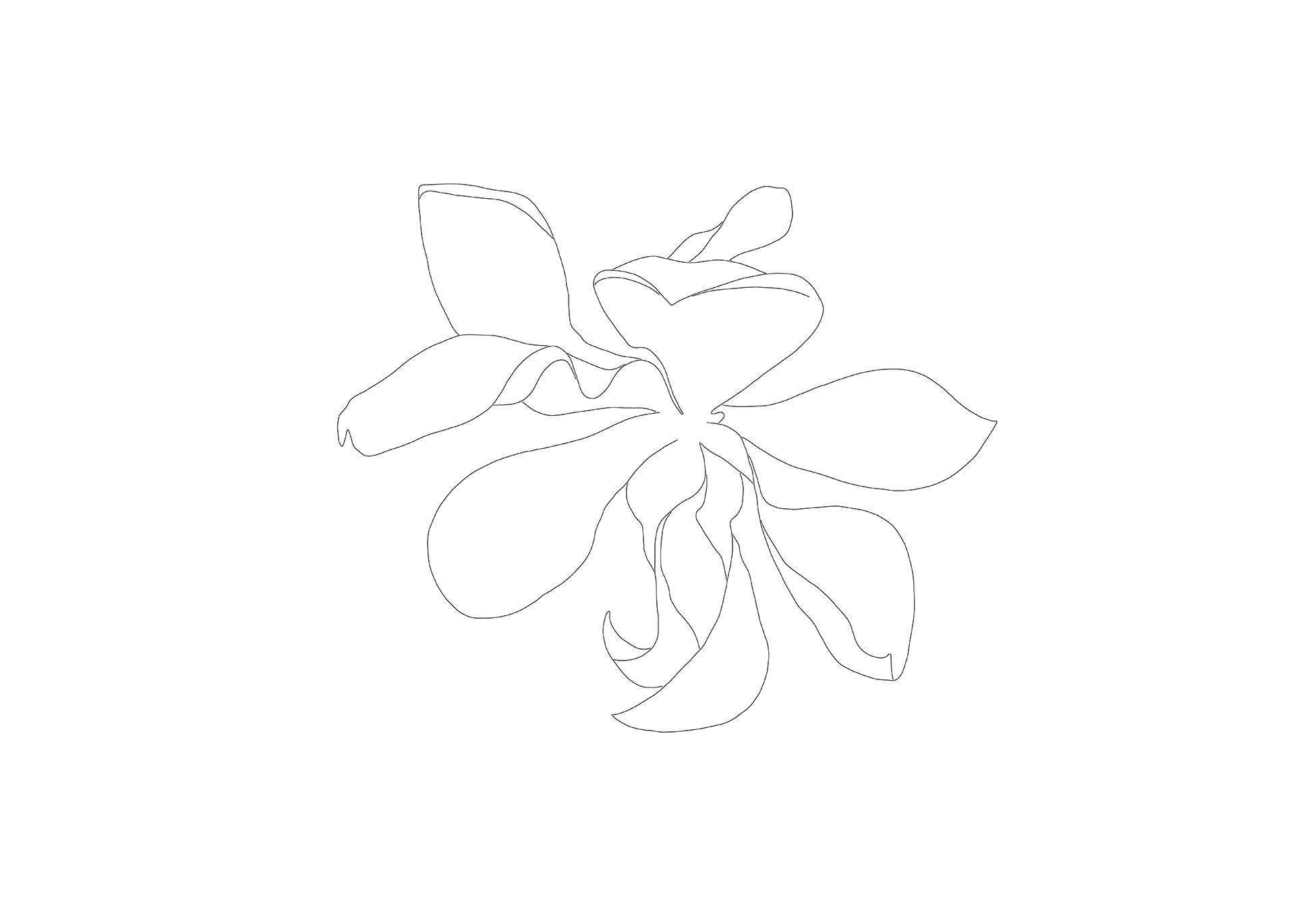 Magnolia Drawing 2, Flower 2