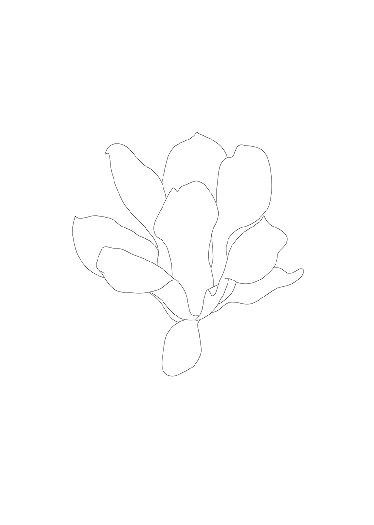 Magnolia Drawing 2, Flower  3