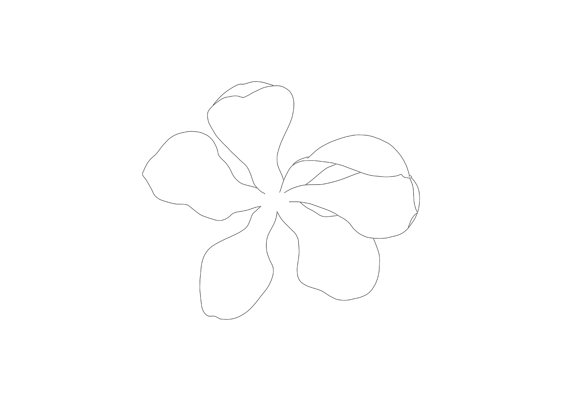 Magnolia Drawing 2, Flower  4
