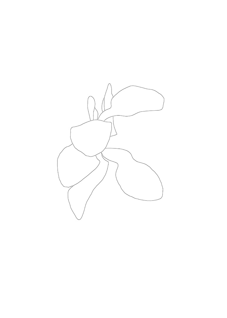 Magnolia Drawing 2, Flower  6