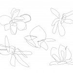 Magnolia Drawing 2, the sketches